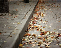 πεσμένα φύλλα Στοκ φωτογραφία με δικαίωμα ελεύθερης χρήσης