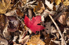 πεσμένα φύλλα στοκ εικόνα με δικαίωμα ελεύθερης χρήσης