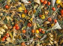 Πεσμένοι καρποί στο λιβάδι Στοκ Εικόνες