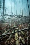 Πεσμένος από τα δέντρα θύελλας στο δάσος Στοκ φωτογραφίες με δικαίωμα ελεύθερης χρήσης