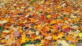 Πεσμένος βγάζει φύλλα στον κήπο μου Στοκ φωτογραφία με δικαίωμα ελεύθερης χρήσης