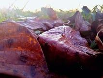 πεσμένος βγάζει φύλλα Στοκ εικόνες με δικαίωμα ελεύθερης χρήσης