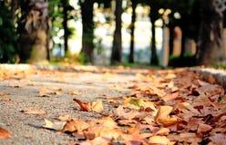 πεσμένος βγάζει φύλλα Στοκ φωτογραφία με δικαίωμα ελεύθερης χρήσης