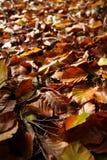 Πεσμένος βγάζει φύλλα Στοκ εικόνα με δικαίωμα ελεύθερης χρήσης
