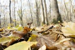 Πεσμένος βγάζει φύλλα και δέντρα Στοκ φωτογραφίες με δικαίωμα ελεύθερης χρήσης