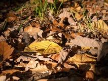 Πεσμένος βγάζει φύλλα Στοκ Φωτογραφία