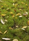 Πεσμένος βγάζει φύλλα Στοκ φωτογραφίες με δικαίωμα ελεύθερης χρήσης