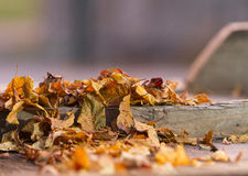 πεσμένος βγάζει φύλλα Στοκ Εικόνα