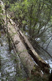 πεσμένος κορμός δέντρων Στοκ Φωτογραφίες
