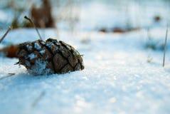 Πεσμένος κώνος στο χιόνι Στοκ Εικόνες