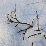 Πεσμένος ξηρός κλάδος Στοκ Φωτογραφίες