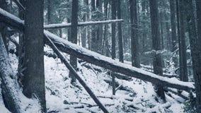 Πεσμένος συνδέεται το χιόνι φιλμ μικρού μήκους