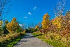 πεσμένος φθινόπωρο δρόμος πάρκων φύλλων τοπίων κίτρινος στοκ εικόνες με δικαίωμα ελεύθερης χρήσης