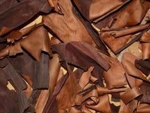 Πεσμένος φλοιός Arbutus Στοκ εικόνα με δικαίωμα ελεύθερης χρήσης