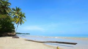 Πεσμένος φοίνικας στην παραλία φιλμ μικρού μήκους
