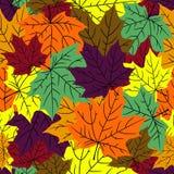 Πεσμένος, φύλλα σφενδάμου ελεύθερη απεικόνιση δικαιώματος