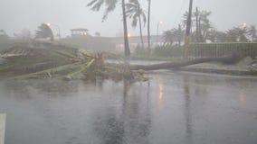 Πεσμένος treein δρόμος από τον τυφώνα απόθεμα βίντεο