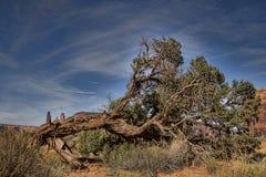 Πεσμένο δέντρο ερήμων Στοκ εικόνα με δικαίωμα ελεύθερης χρήσης
