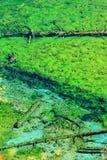 Πεσμένο δέντρο κάτω από το ζωηρόχρωμο νερό Στοκ εικόνες με δικαίωμα ελεύθερης χρήσης