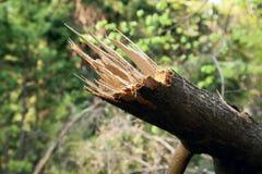 Πεσμένο δέντρο και πράσινο υπόβαθρο στοκ εικόνα με δικαίωμα ελεύθερης χρήσης