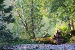 Πεσμένο δέντρο στην κοίτη του ποταμού Στοκ Εικόνες
