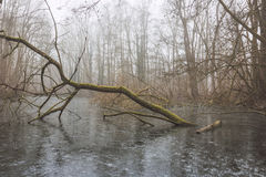 Πεσμένο δέντρο στην παγωμένη λίμνη Στοκ Φωτογραφία