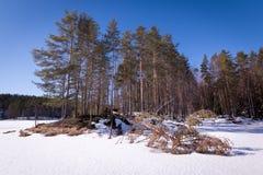 Πεσμένο δέντρο στον πάγο Στοκ εικόνες με δικαίωμα ελεύθερης χρήσης