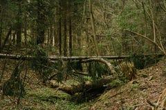 Πεσμένο δέντρο στο βαθύ - πράσινο σκοτεινό δάσος Στοκ Εικόνα