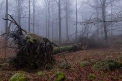 Πεσμένο δέντρο στο misty δάσος Στοκ εικόνα με δικαίωμα ελεύθερης χρήσης
