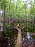 πεσμένο δέντρο Στοκ Εικόνα