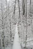 Πεσμένο δέντρο που καλύπτεται με το χιόνι στοκ φωτογραφία με δικαίωμα ελεύθερης χρήσης