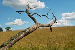 πεσμένο δέντρο στοκ φωτογραφία