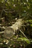 πεσμένο δέντρο Στοκ εικόνες με δικαίωμα ελεύθερης χρήσης