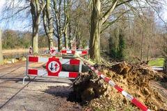 Πεσμένο ζημία δέντρο θύελλας σημαδιών κυκλοφορίας προβλημάτων κυκλοφορίας Στοκ φωτογραφίες με δικαίωμα ελεύθερης χρήσης