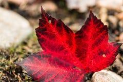 Πεσμένο κόκκινο φθινόπωρο σημαδιών φύλλων Στοκ εικόνα με δικαίωμα ελεύθερης χρήσης