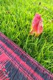 Πεσμένο λουλούδι στην πράσινη χλόη κοντά στο κόκκινο μαύρο πλαστικό χαλί Στοκ φωτογραφίες με δικαίωμα ελεύθερης χρήσης