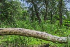 Πεσμένο νεκρό δέντρο Στοκ Φωτογραφία