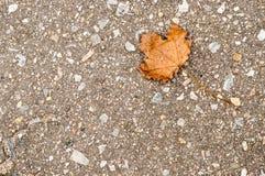 Πεσμένο φύλλο στην γκρίζα άσφαλτο το φθινόπωρο Στοκ Εικόνα