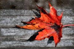 Πεσμένο φύλλο σφενδάμου σε έναν πάγκο κάτω από το χιόνι Στοκ Εικόνα