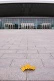 Πεσμένο φύλλο και σύγχρονο κτήριο Στοκ εικόνες με δικαίωμα ελεύθερης χρήσης