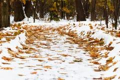 Πεσμένο φύλλο που καλύπτεται από το πρώτο χιόνι το βράδυ φθινοπώρου Στοκ φωτογραφία με δικαίωμα ελεύθερης χρήσης