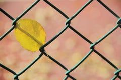Πεσμένο φύλλο που πιάνεται στο φράκτη καλωδίων Στοκ εικόνα με δικαίωμα ελεύθερης χρήσης