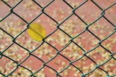 Πεσμένο φύλλο που πιάνεται στο φράκτη καλωδίων Στοκ Φωτογραφία