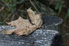 Πεσμένο φύλλο σε έναν φράκτη στοκ φωτογραφία με δικαίωμα ελεύθερης χρήσης