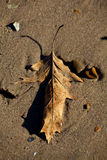 Πεσμένο φύλλο Nestled στην άμμο Στοκ φωτογραφίες με δικαίωμα ελεύθερης χρήσης