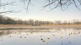 Πεταγμένη κενή λίμνη χωρίς νερό Του γλυκού νερού κοχύλια και οστρακόδερμα Κάλαμος γύρω από τη λίμνη, ηλιόλουστη ατμόσφαιρα άνοιξη φιλμ μικρού μήκους