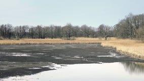 Πεταγμένη κενή λίμνη χωρίς νερό Του γλυκού νερού κοχύλια και οστρακόδερμα Κάλαμος γύρω από τη λίμνη, ηλιόλουστη ατμόσφαιρα άνοιξη απόθεμα βίντεο