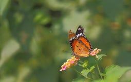 Πεταλούδα, άγριο λουλούδι, πράσινο υπόβαθρο Στοκ εικόνα με δικαίωμα ελεύθερης χρήσης