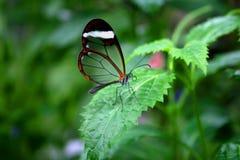 πεταλούδα αόρατη Στοκ φωτογραφία με δικαίωμα ελεύθερης χρήσης