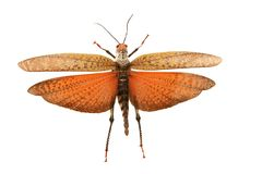 πεταλούδα ευχάριστη Στοκ φωτογραφία με δικαίωμα ελεύθερης χρήσης